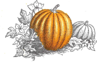 Highlights pumpkin
